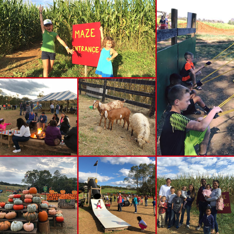 Corn Maze in the Plains