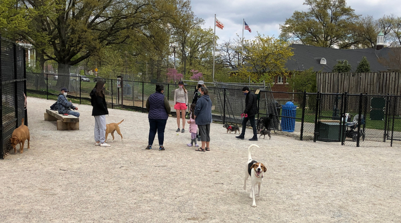 Local Dogs Enjoy Northern Ward 4 Dog Park Soft Opening